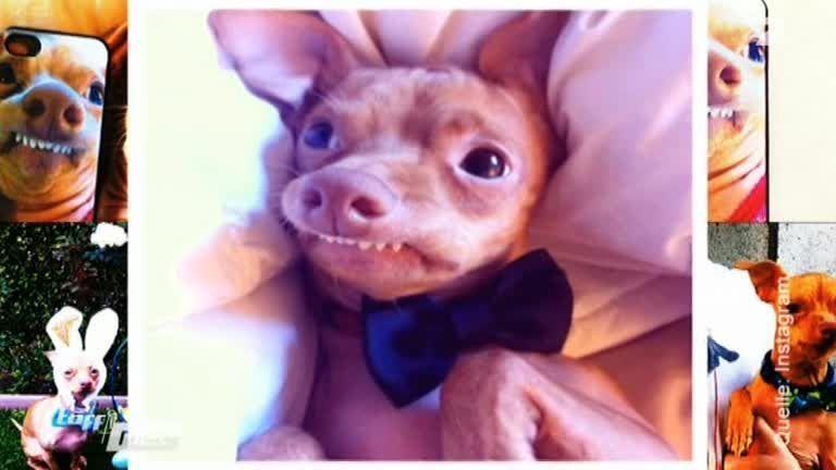 Zwei Millionen Follower: Überbiss-Hund Tuna erobert das Netz