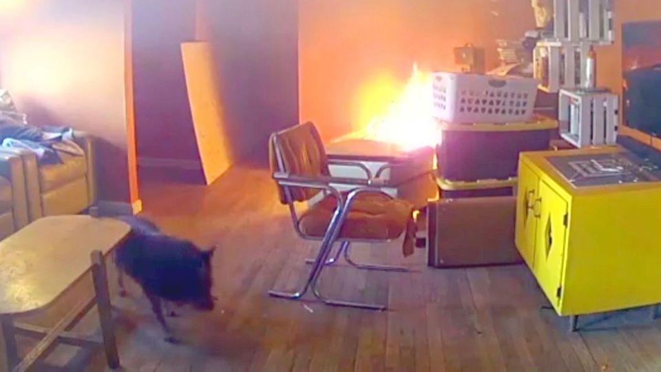 Hund wirft Bügelbrett um und löst Feuer aus - Überwachungskamera filmt