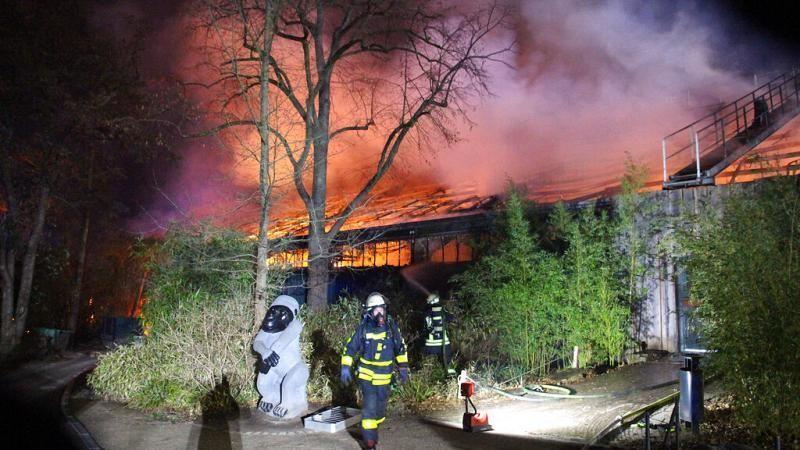 Brand in Zoo Krefeld durch Himmelslaterne? Trauer um getötete Affen
