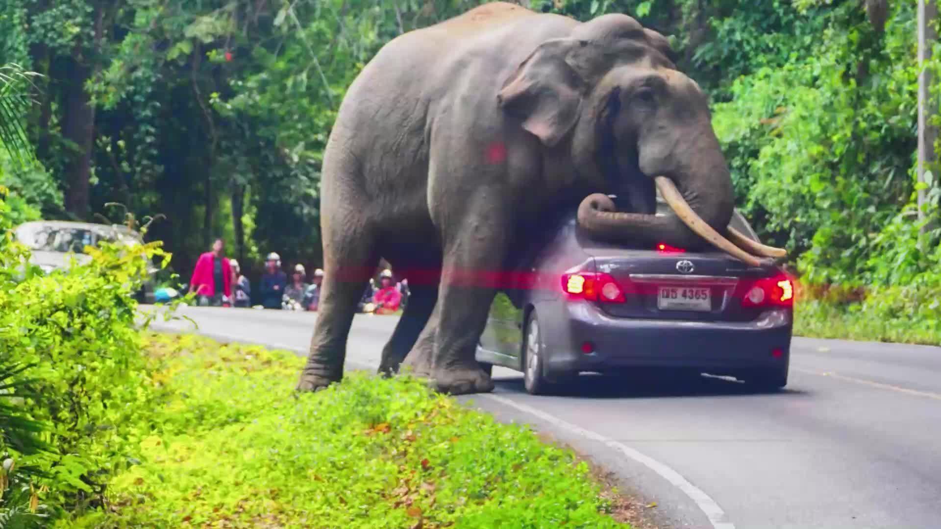 Heftige Aufnahmen: Elefant setzt sich auf besetztes Auto