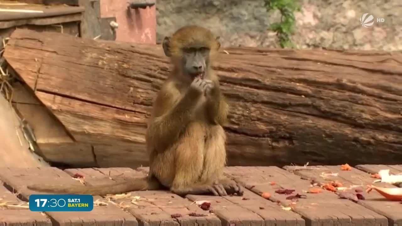 Nach 18 Wochen Lockdown: Münchner Tierpark Hellabrunn öffnet